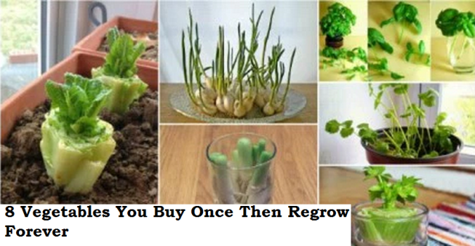 8 Vegetables You Buy Once And Regrow Forever ! How To Grow Them Full Tips