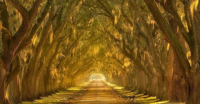 20 Mystical Tree Tunnels That You Would Want To Walk Through For Infinite Time