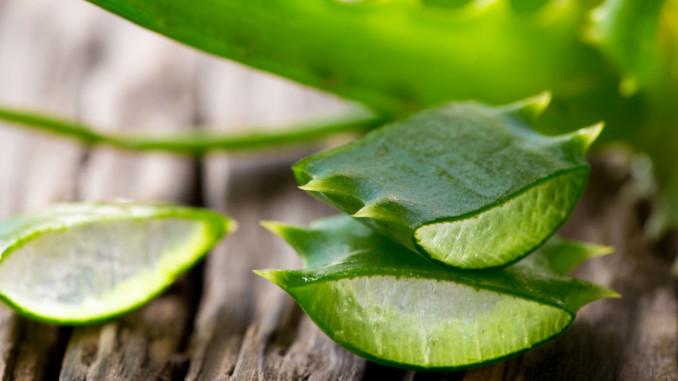 Amazing Uses for Aloe Vera